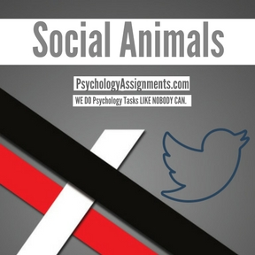 Social Animals Assignment Help